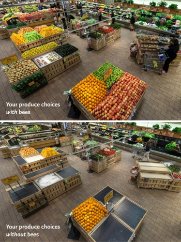WHOLE FOODS MARKET PRODUCE DEPARTMENT